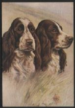 Springer Spaniel tobacco cigarette card postcard dogs 1930's #04
